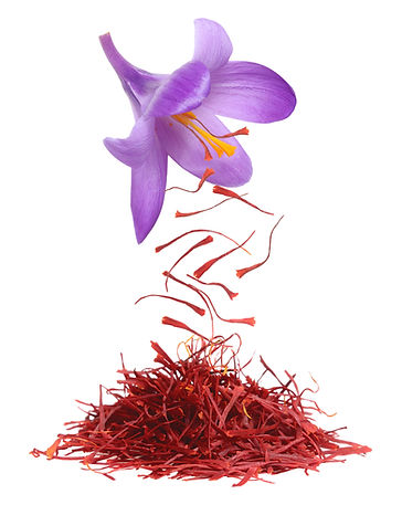 Dried saffron spice isolated on white ba