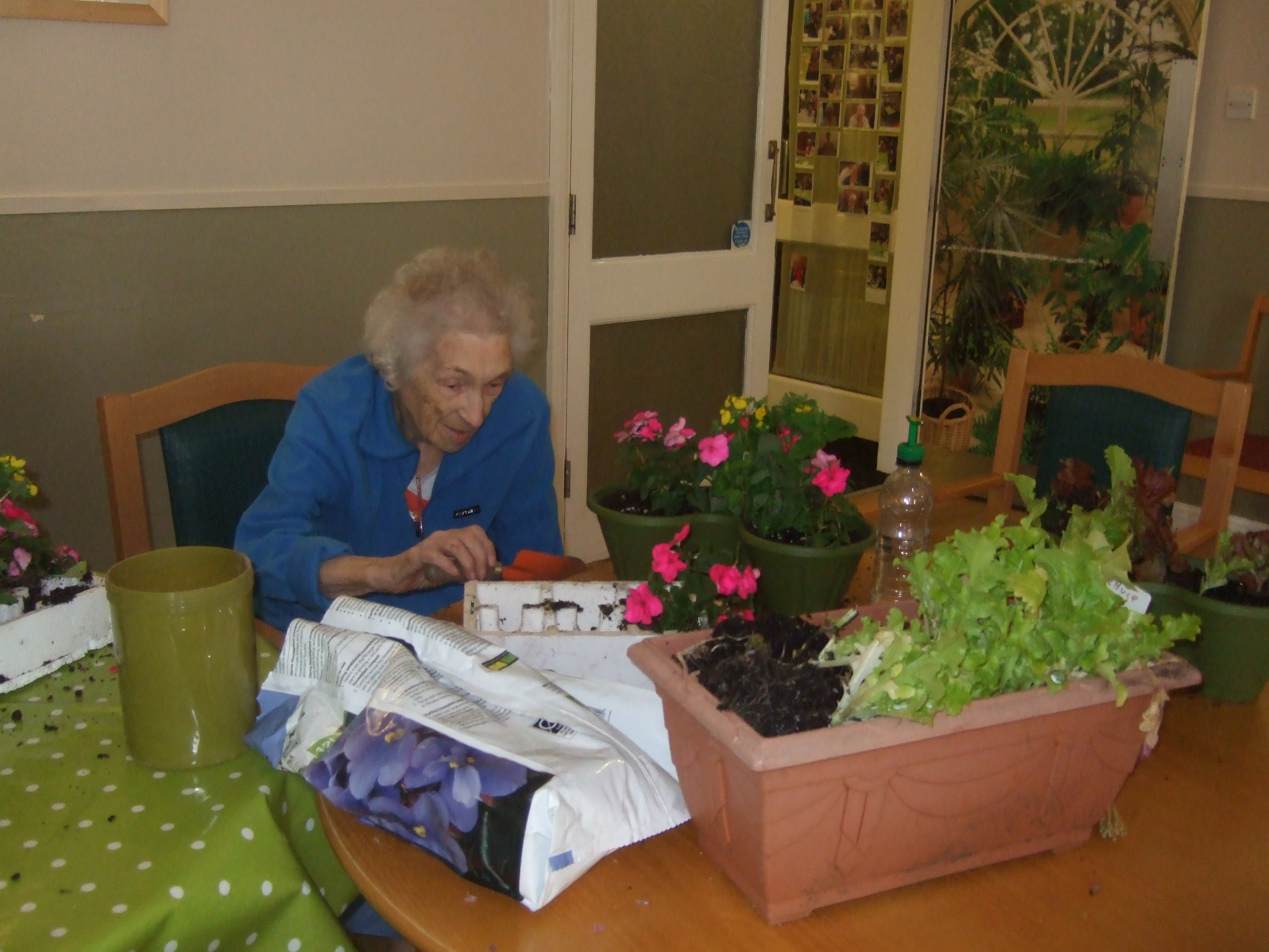 gardening activities for the retired