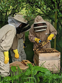 intro to bee keeping.jpg