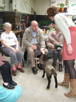 Retired visitors feed the lambs