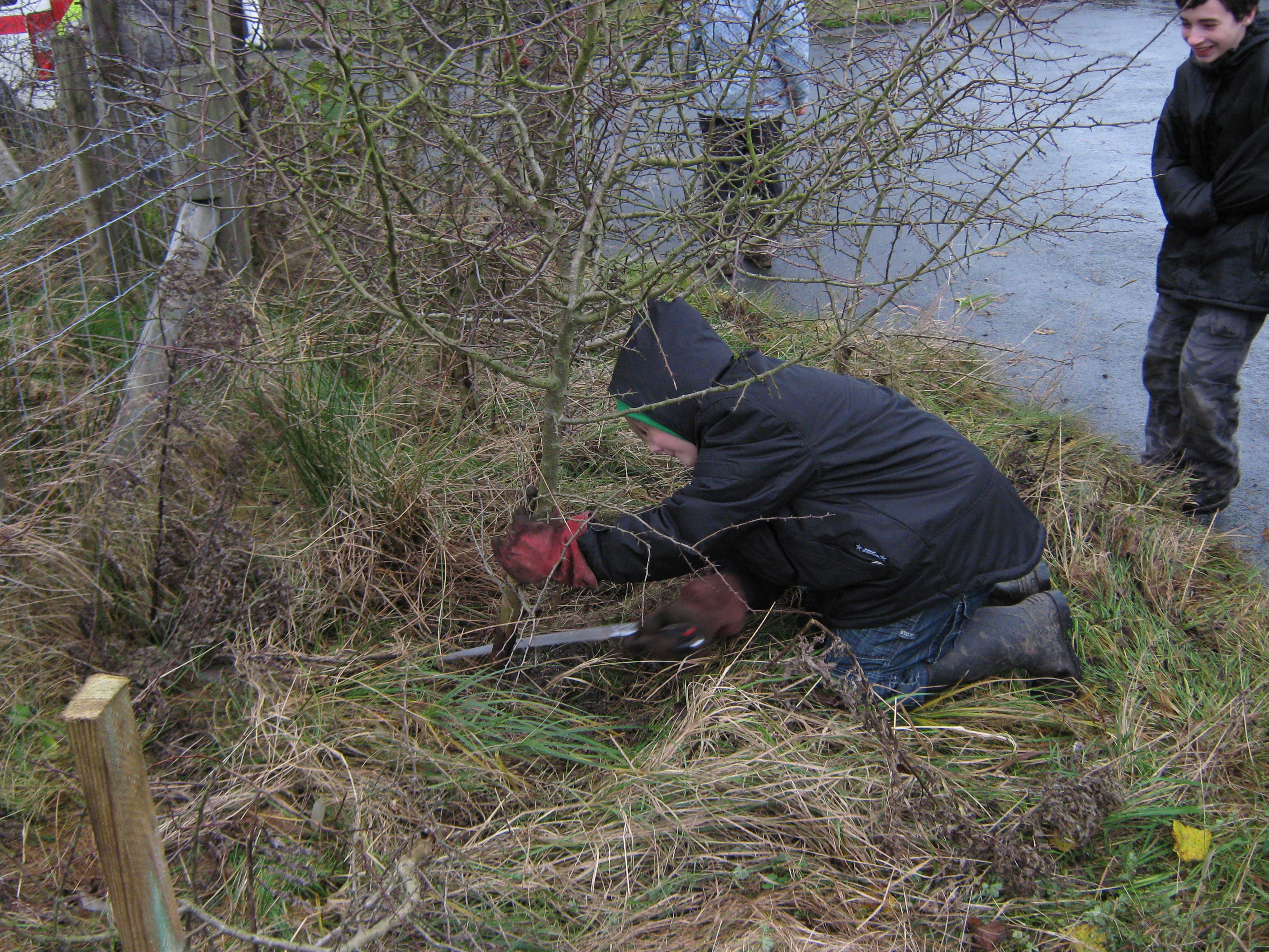 Rural skills : Hedge laying