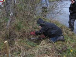Rural skills : Hedge laying