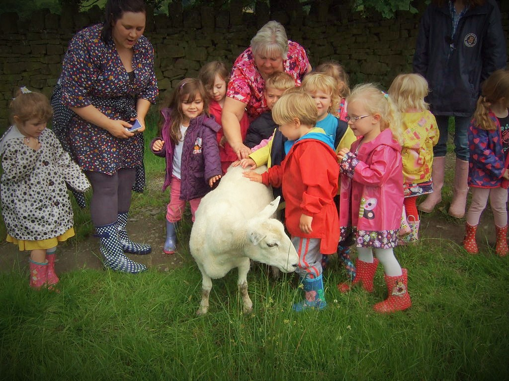 children stroke sheep