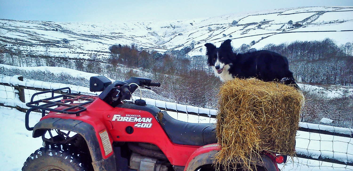 Dog ATV training by Dot McCarthy