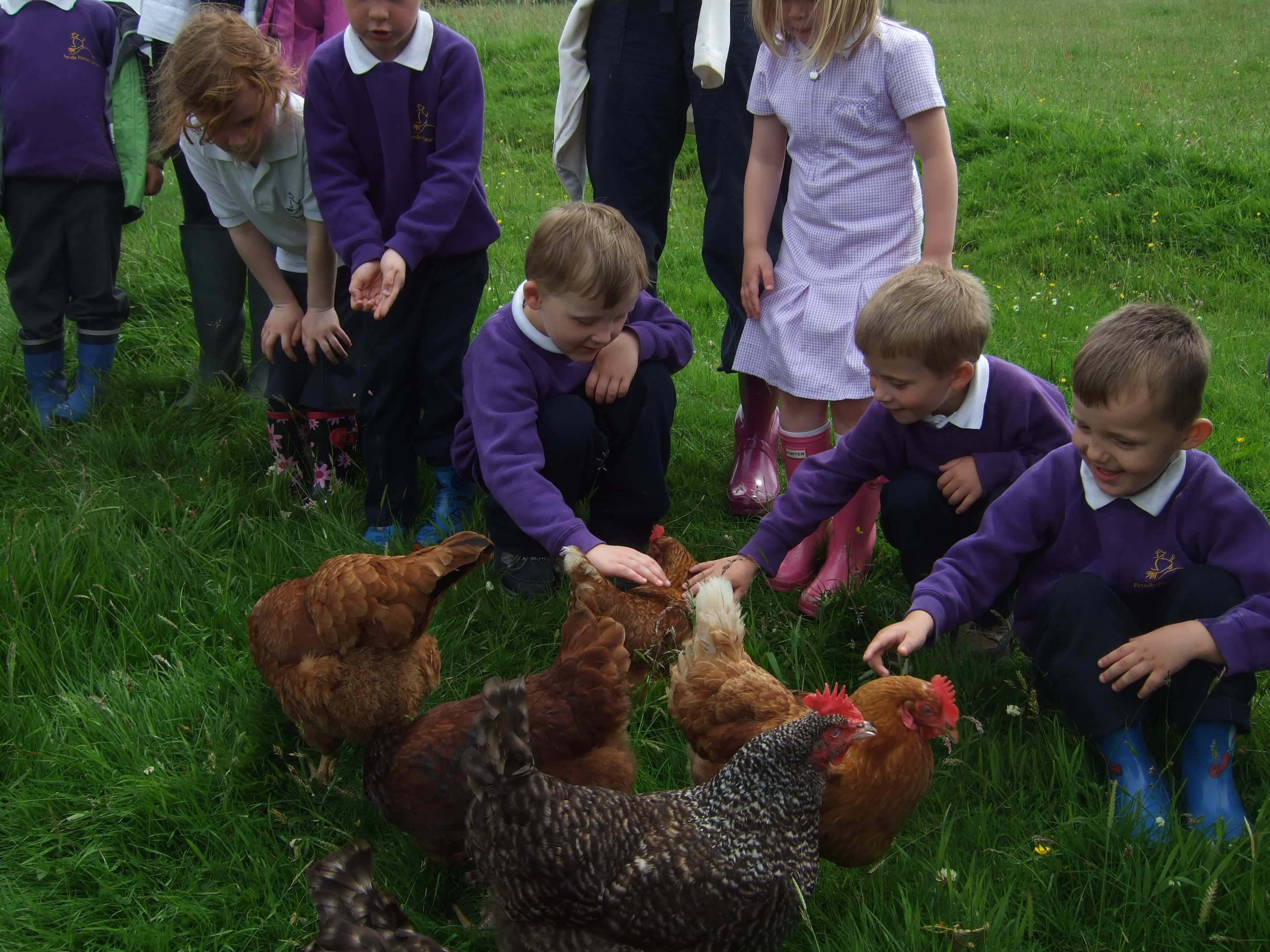 Class feeds chickens