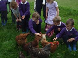 Class feeds chickens