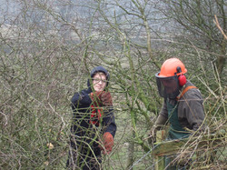 learning hedge laying