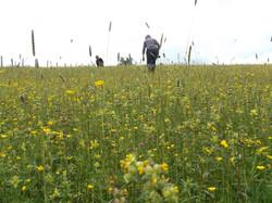 Exploring our meadows