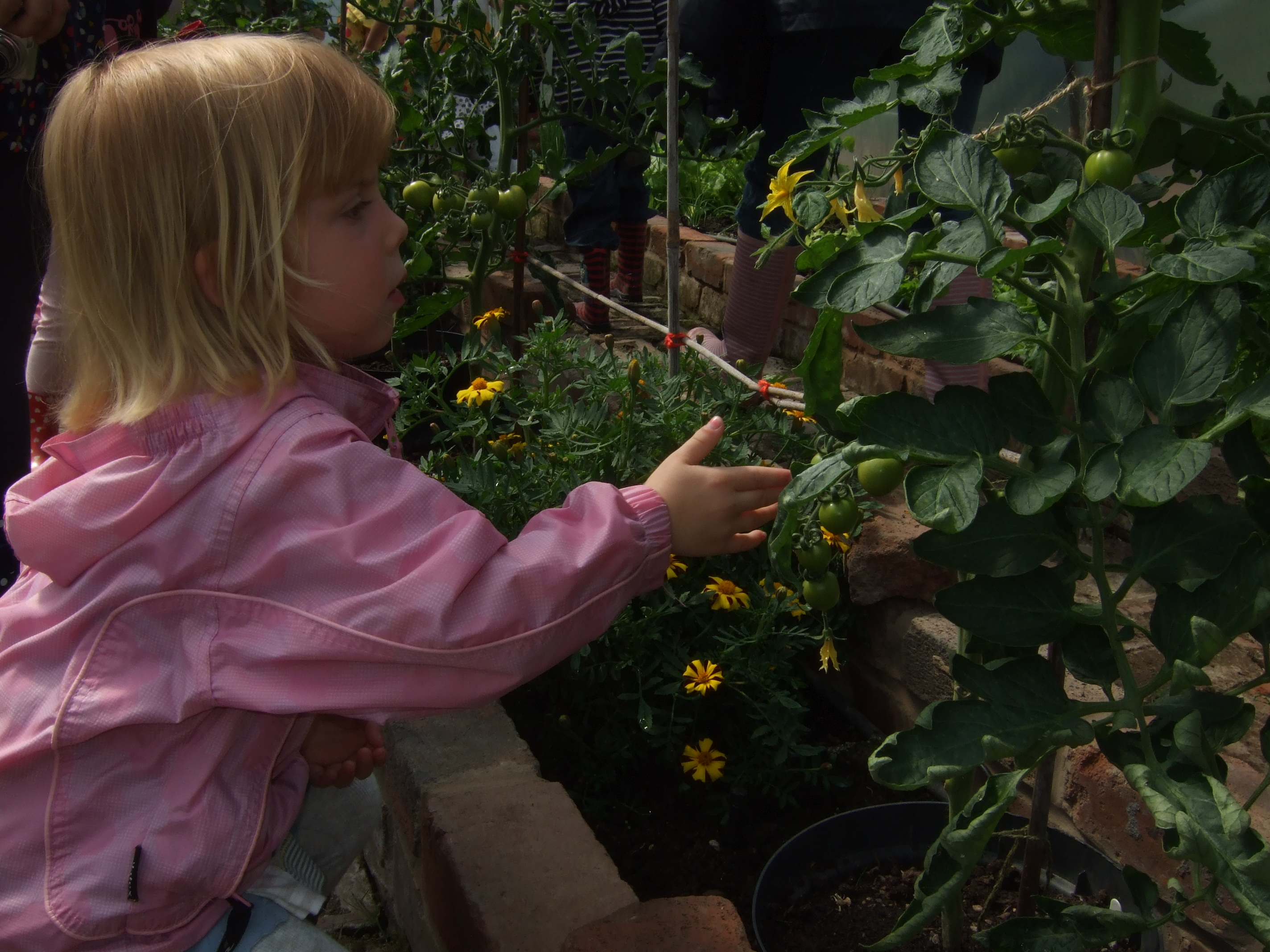child investigates plants