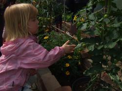 child investigates plants