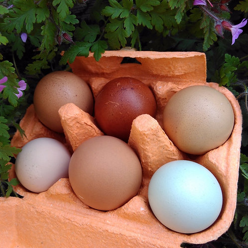 6 free range rainbow eggs