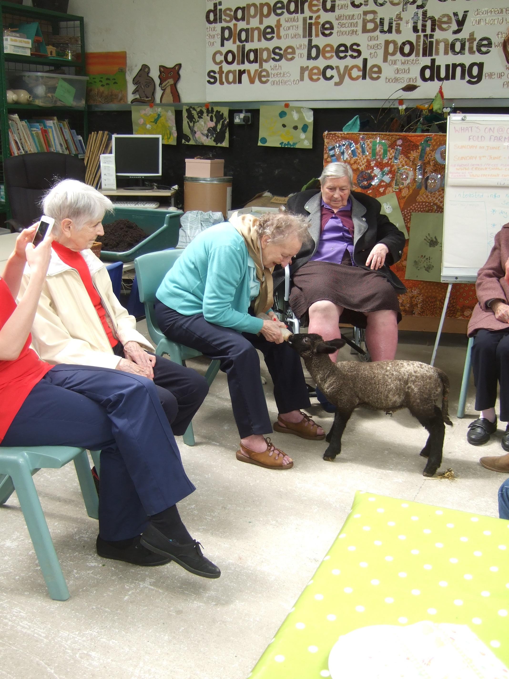 feeding lambs retirement visit