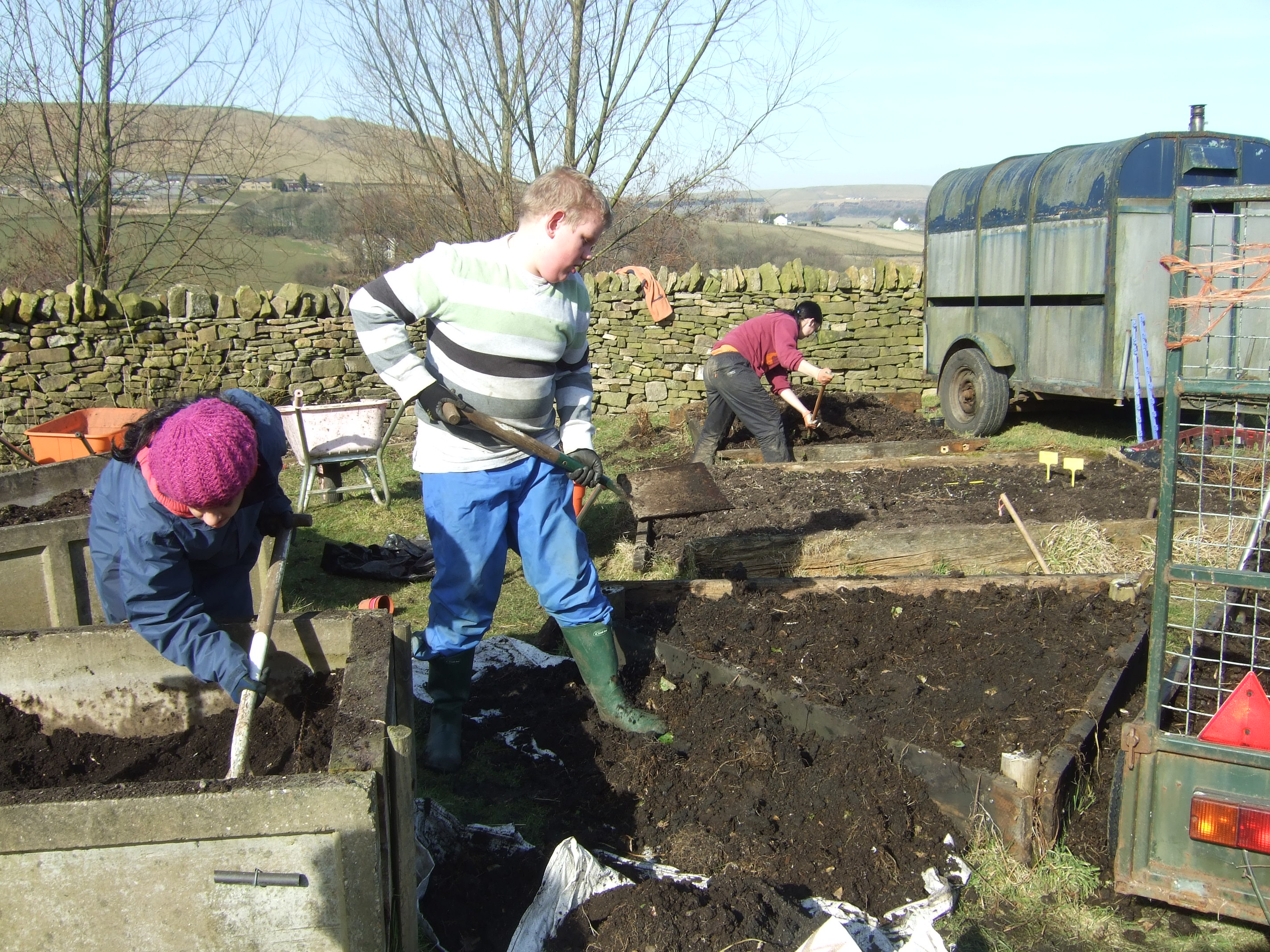 planting up the walled garden