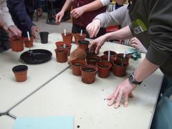 labeling the seedlings