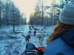 Dot McCarthy training sled dogs