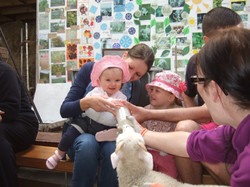 Feeding lambs at Cronkshaw Fold