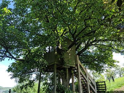 treehousesummer (5).jpg