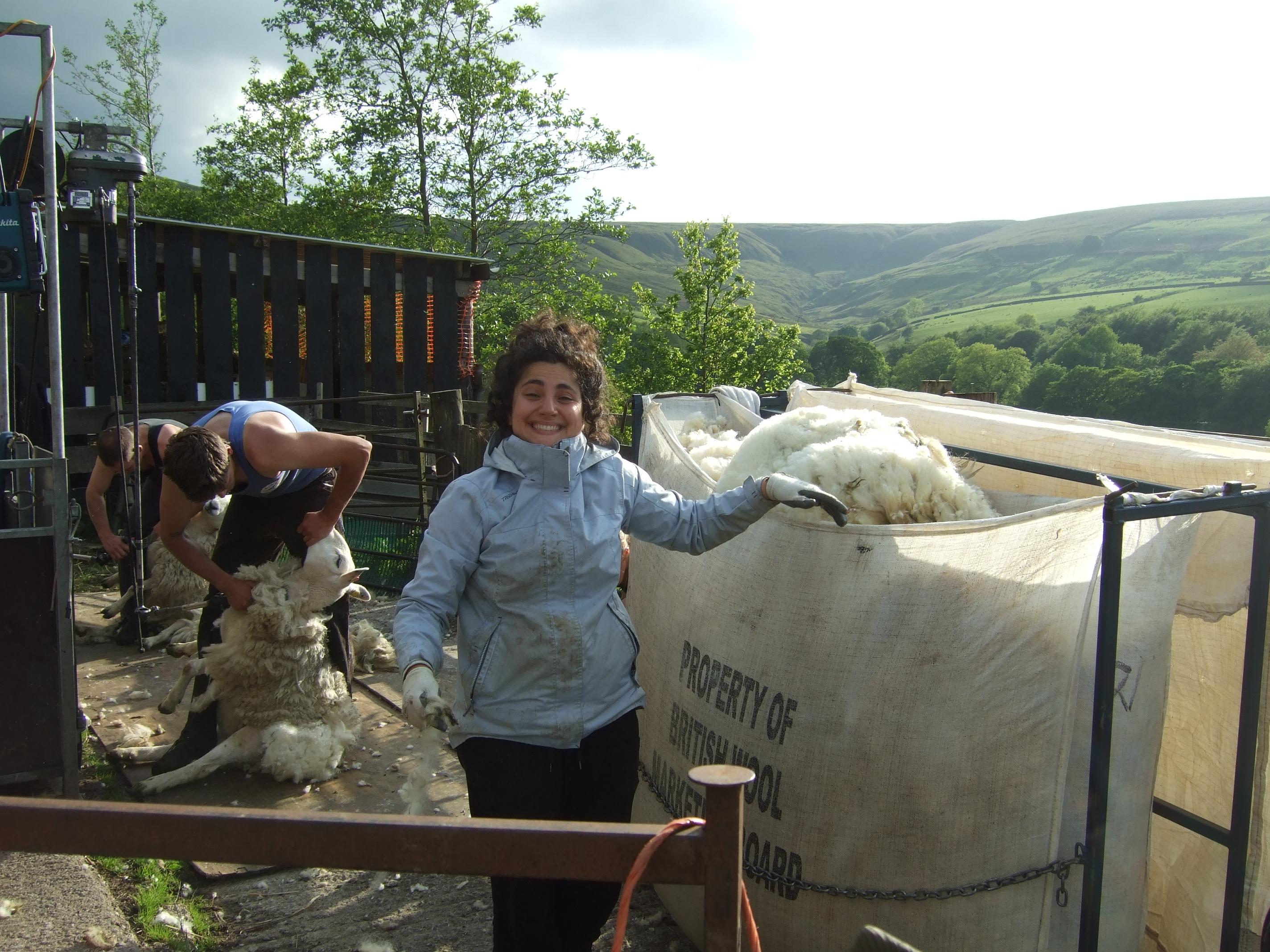 filling the wool sacks