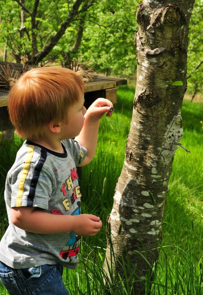 Cronkshaw Fold Farm activities