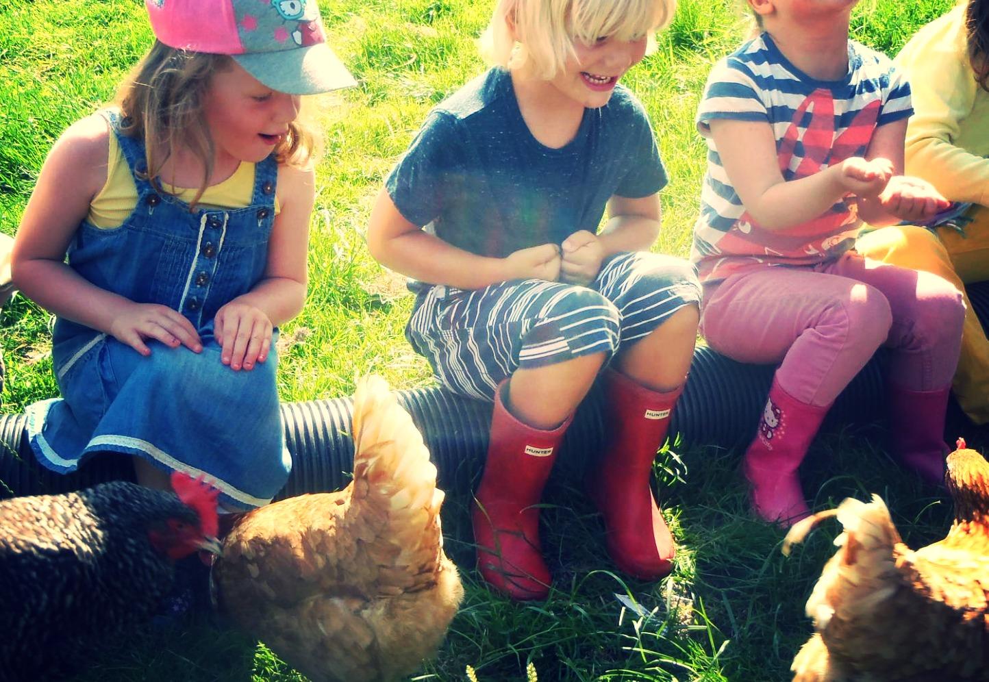 children feeding free range hens