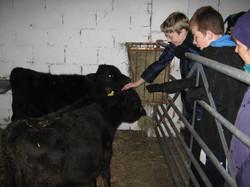 Meeting the livestock