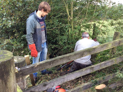 hedge laying courses