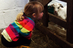 children and goat kids looking on