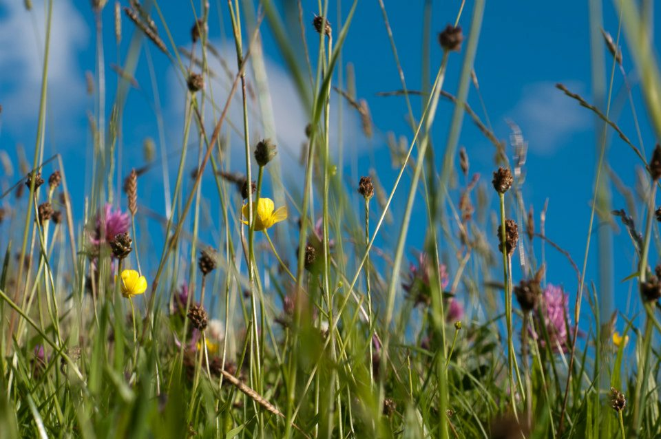 meadow grass Rossendale