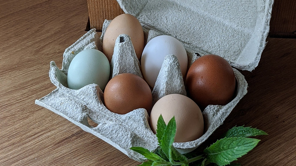 Outdoor Free range mixed variety hens eggs