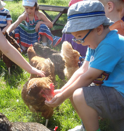 hens eating from your hand