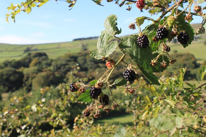 Blackberries for sale, Helmshore