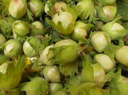 Fresh Hazel nuts for sale, Helmshore