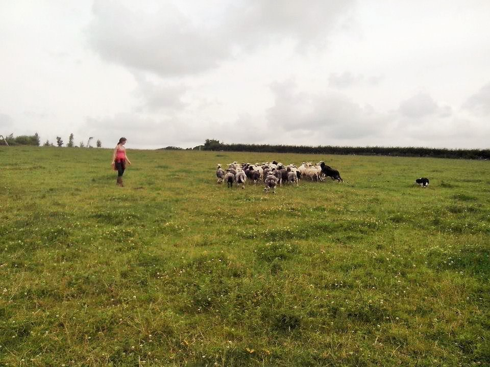Dot McCarthy, sheep dog trainer