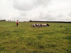 Dot McCarthy, sheep dog trainer