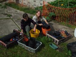 planting up seedlings