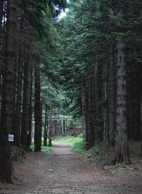 sentiero2.jpeg