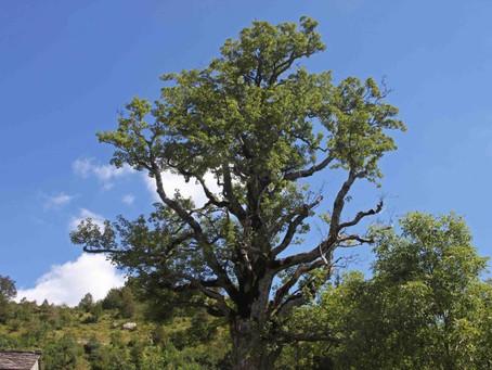 I 10 alberi imperdibili dell'Appennino Modenese!