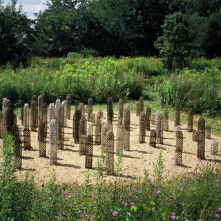 August Grove Four Seasons