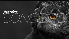 Lions'den - Songbird has been released