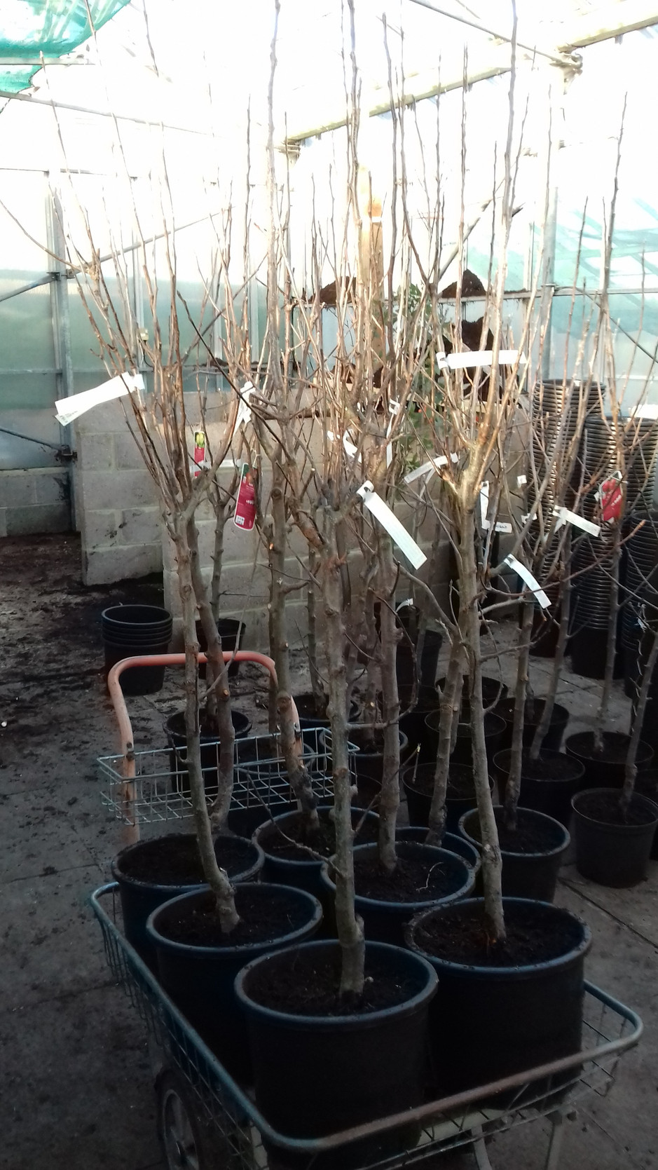 QUALITY NEW TREES NOW IN