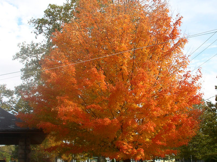 Fall at the Easton Historical Society