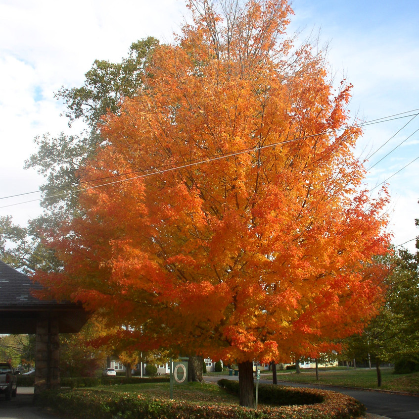 Fall at Easton HS