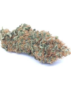Grapefruit (Sativa)