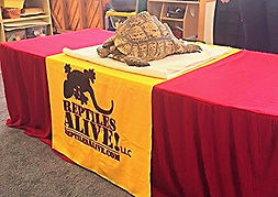 Creative Learning Center - Reptiles Alive Visit our School