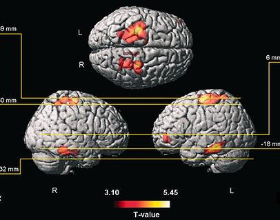 brain growth.jpg