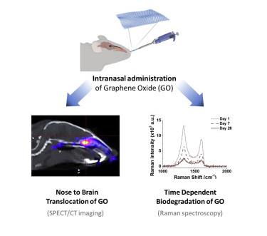 Nose-to-Brain Translocation and Cerebral Biodegradation of Thin Graphene Oxide Nanosheets