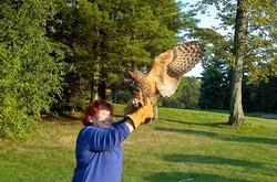Owls-4_t670