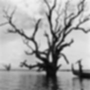 girl with a parasol standing in a small boat next to a dramatic dead tree in Burma/Myanmar