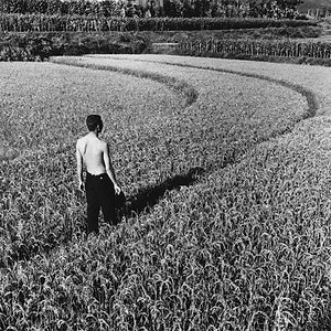 Young man in curved, rice field in china.
