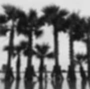 group of girls in a line with row of palm trees in Burma/Myanmar